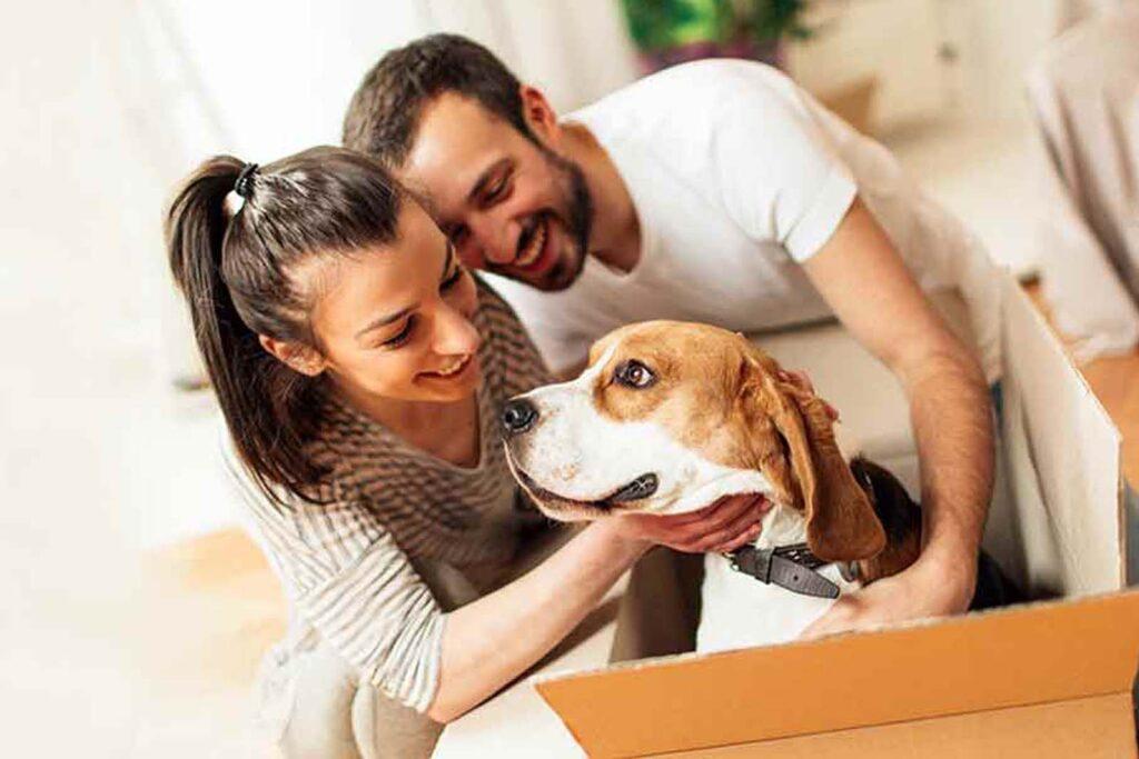 Cómo-hacer-una-mudanza-con-mascotas